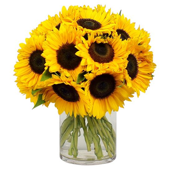 12 Sunflower in Vase
