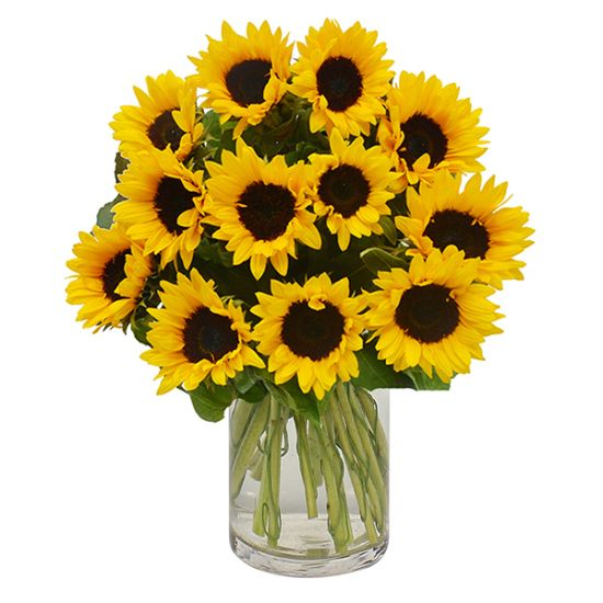 18 Sunflower in Vase