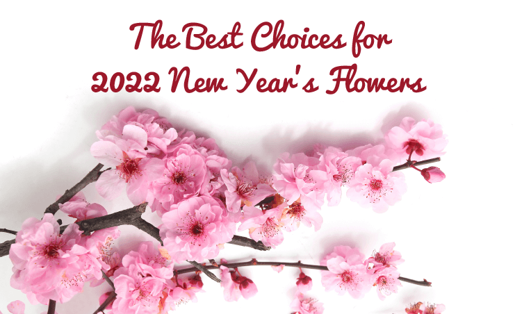 Everything You Need to Know About Sunflowers